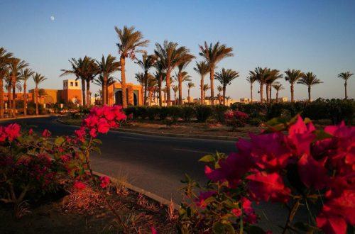 Egyiptom, Hurghada, Marsa alam, port galib hotel előtti utcakép. pálmafákkal, virágokkal.