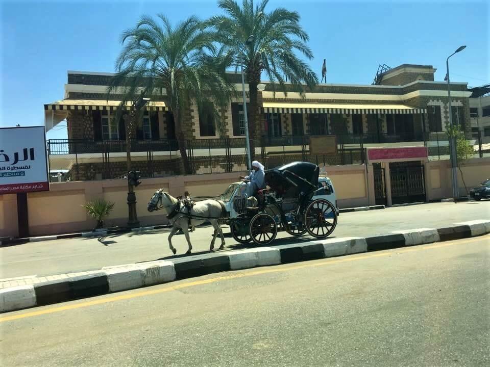 Egyiptom, luxor, utca, lovaskocsi, hintó, pálmafák, nyaralás