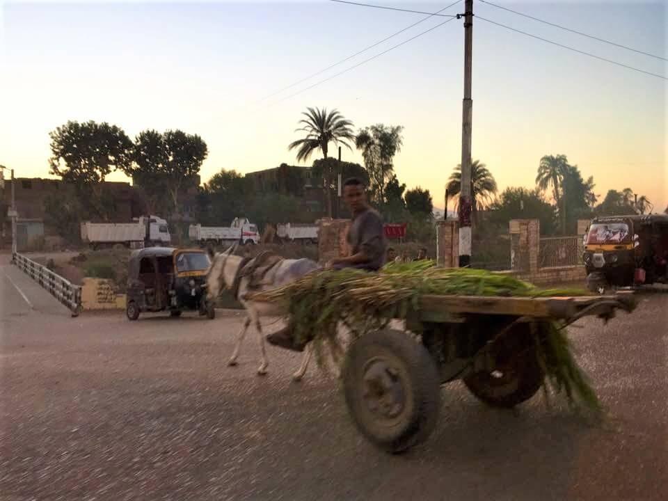 Egyiptom, luxor, utca, pálmafák, nyaralás,szamár, szekér, szegénység